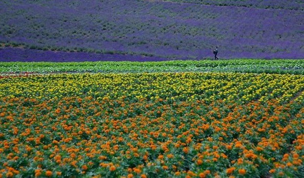 field-of-flowers- (26)