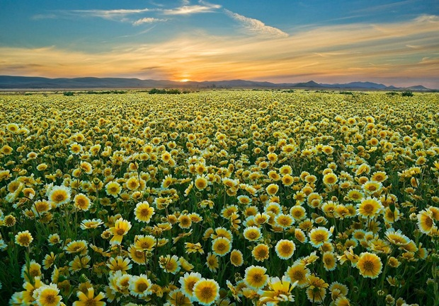 field-of-flowers- (3)