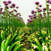 Beautiful Field Of Flowers (40 Photos)