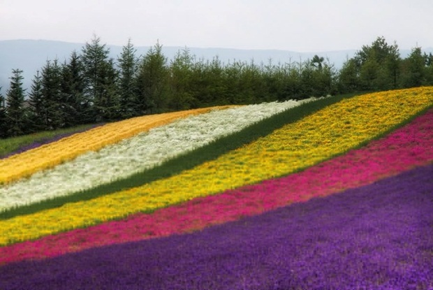 field-of-flowers- (37)
