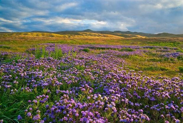 field-of-flowers- (39)