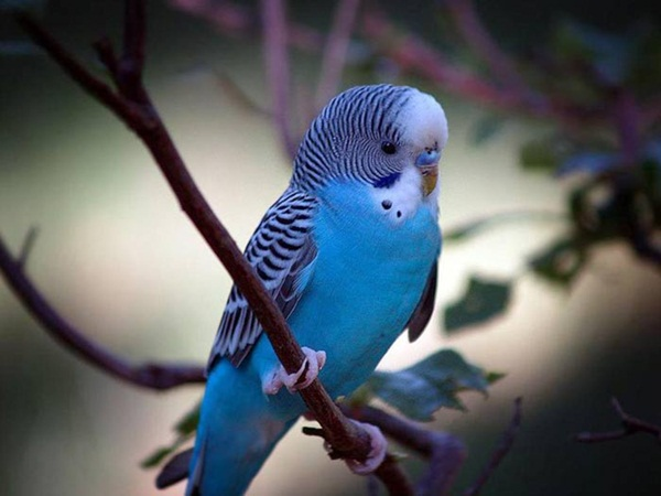 most-beautiful-birds-in-the-world-37-photos- (12)
