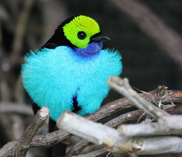most-beautiful-birds-in-the-world-37-photos- (13)