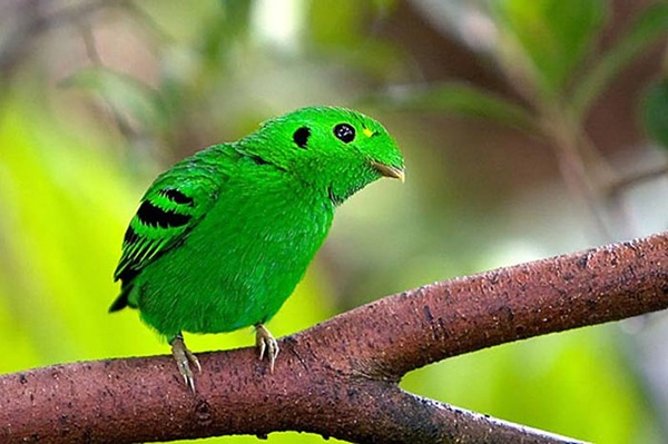 most-beautiful-birds-in-the-world-37-photos- (23)