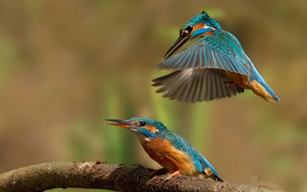 most-beautiful-birds-in-the-world-37-photos- (36)
