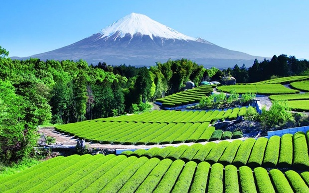 beautiful-places-to-visit-in-japan- (15)