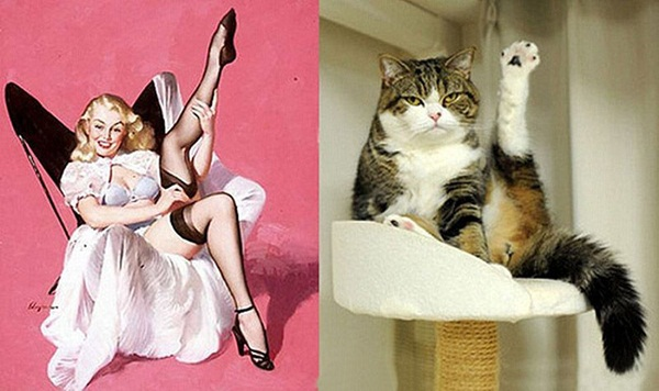 cats-imitate-the-girls- (13)