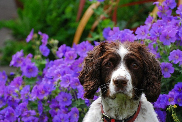 dogs-in-flowers- (10)