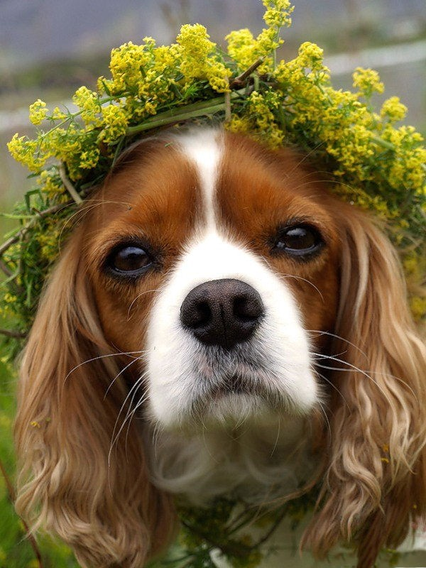 dogs-in-flowers- (12)