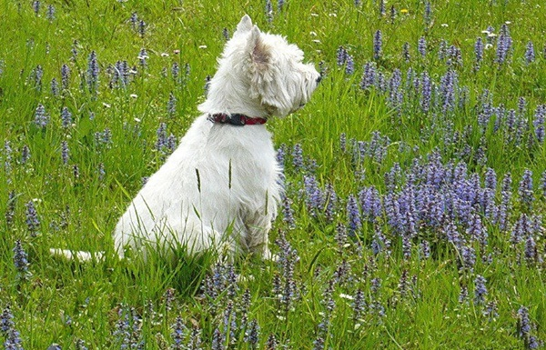 dogs-in-flowers- (16)