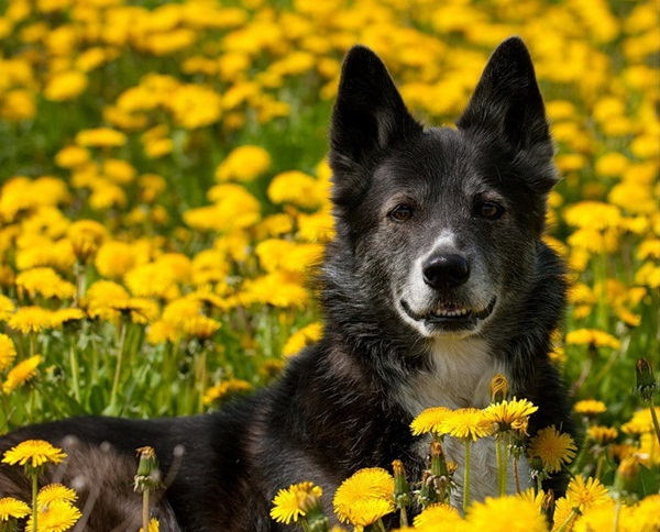 dogs-in-flowers- (19)