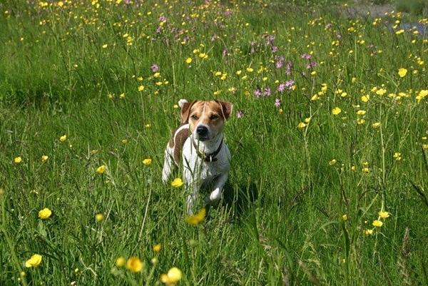 dogs-in-flowers- (7)