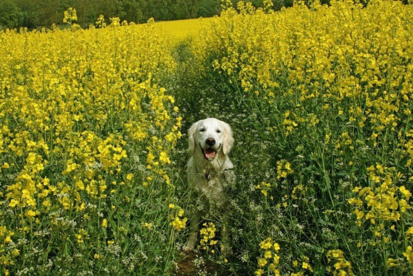 dogs-in-flowers- (8)