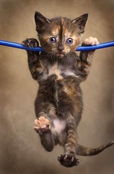 funny-cats-25-photos- (11)