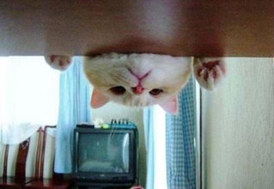 funny-cats-25-photos- (13)