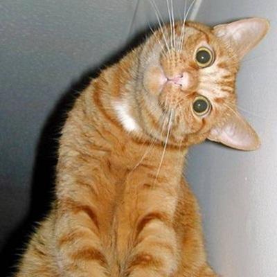 funny-cats-25-photos- (14)
