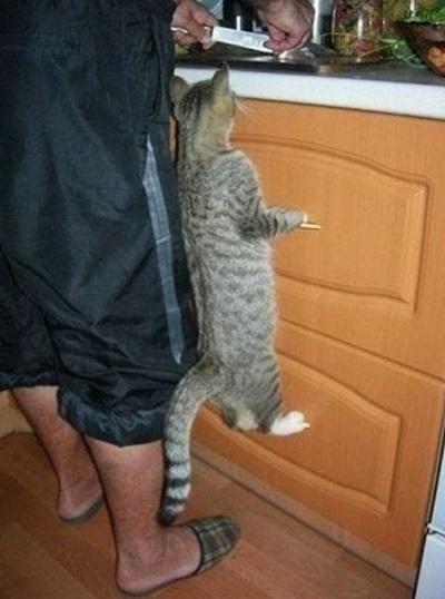 funny-cats-25-photos- (17)