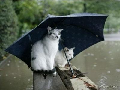funny-cats-25-photos- (18)