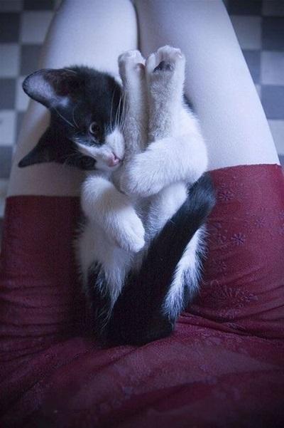 funny-cats-25-photos- (19)