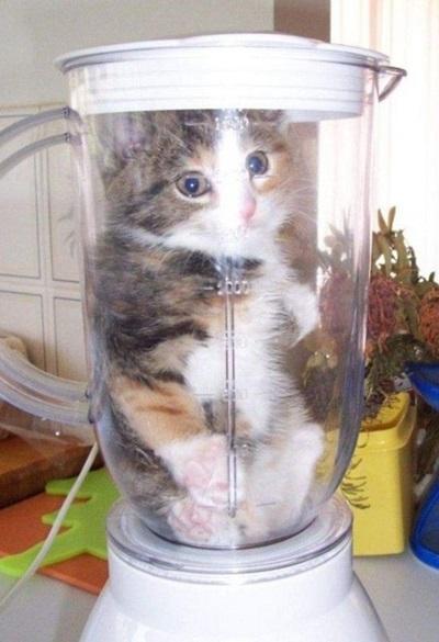 funny-cats-25-photos- (22)