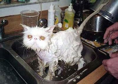 funny-cats-25-photos- (24)