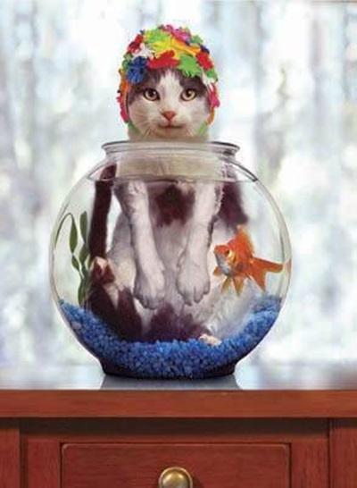 funny-cats-25-photos- (3)