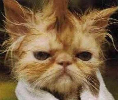 funny-cats-25-photos- (4)