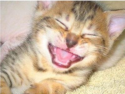 funny-cats-25-photos- (6)
