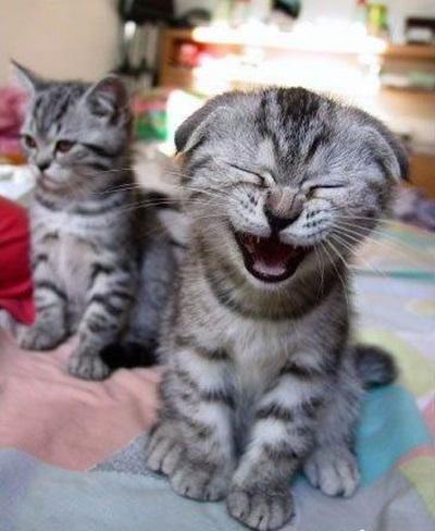 funny-cats-25-photos- (8)