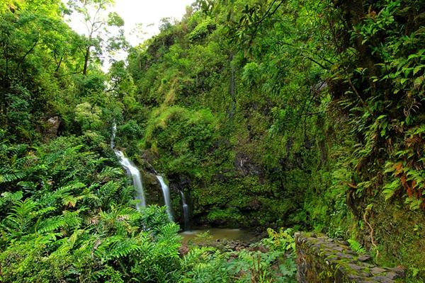 maui-gardens- (11)