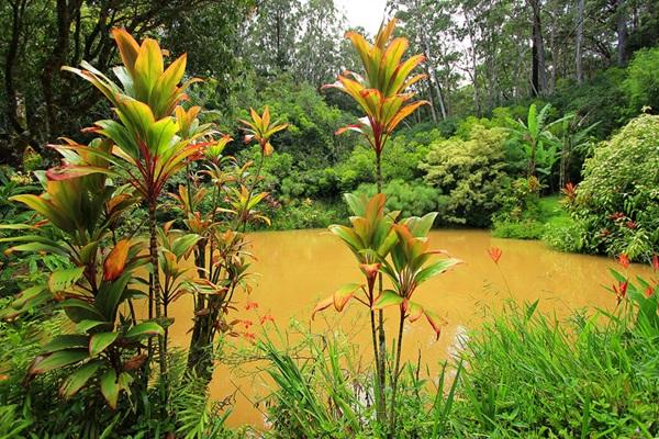 maui-gardens- (13)