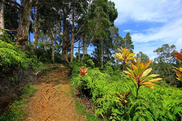 maui-gardens- (14)