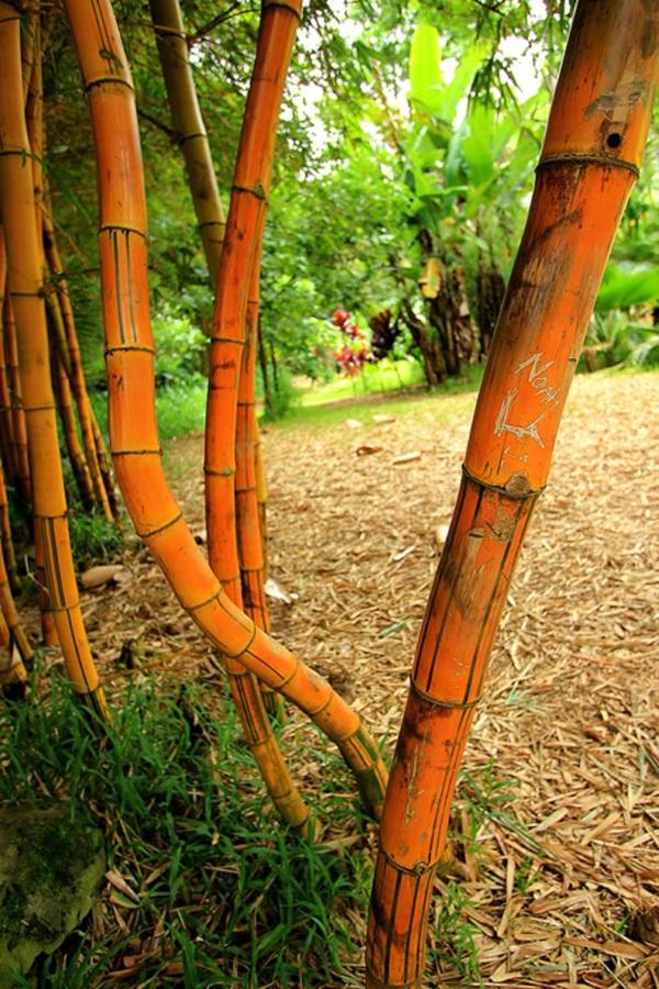 maui-gardens- (24)