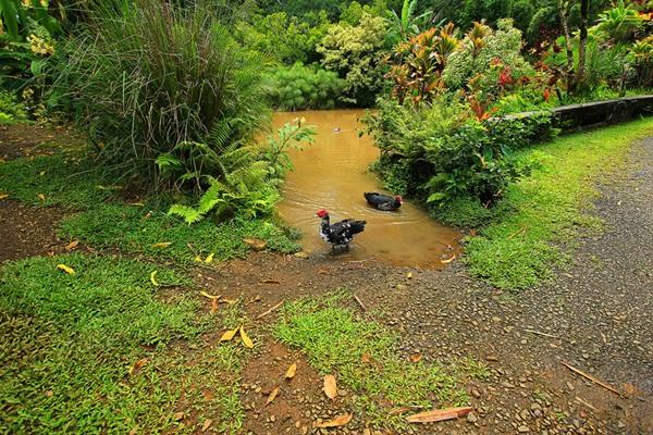 maui-gardens- (7)