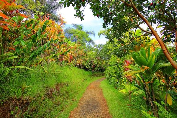 maui-gardens- (8)