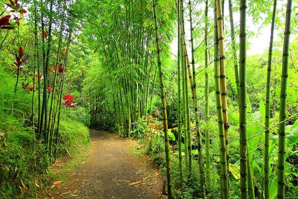 maui-gardens- (9)