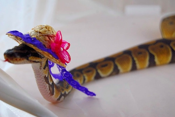 snakes-in-hats- (12)