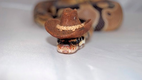 snakes-in-hats- (14)