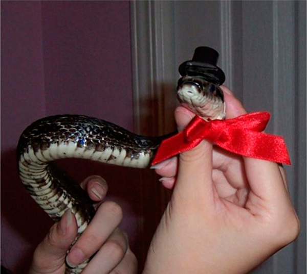 snakes-in-hats- (2)