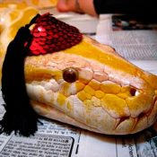 Cute Snakes In Hats