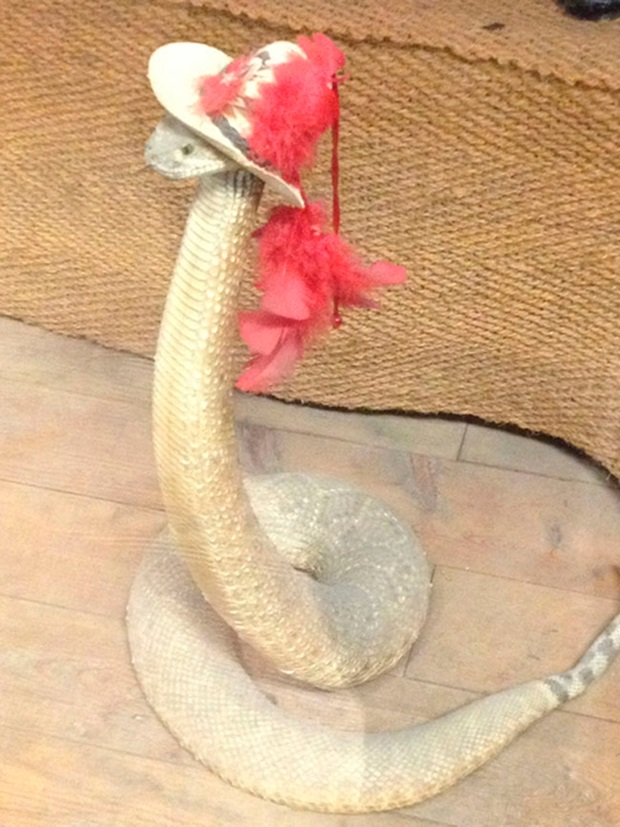 snakes-in-hats- (6)