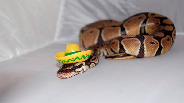 snakes-in-hats- (8)