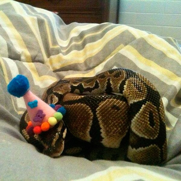 snakes-in-hats- (9)