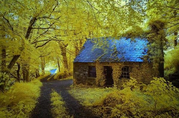 wood-house- (5)