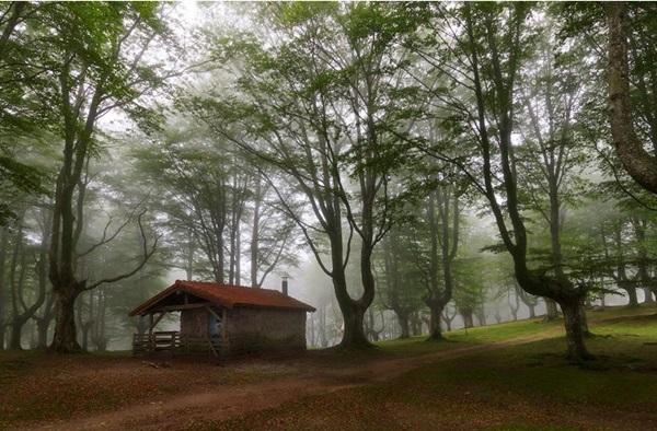 wood-house- (7)