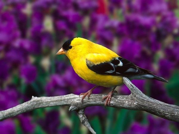 birds-on-tree- (10)
