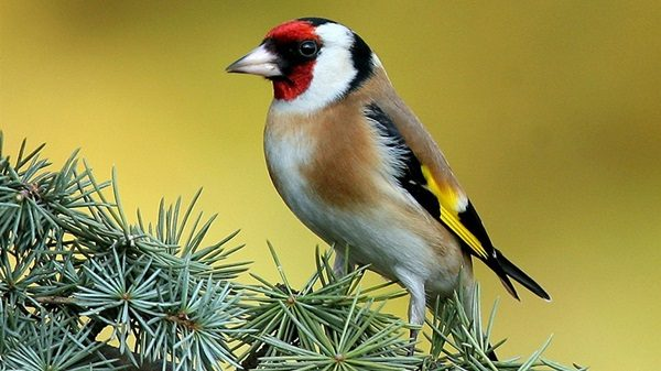 Beautiful Birds On Tree (22 Photos)