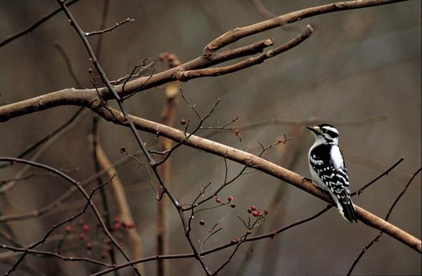 birds-on-tree- (12)
