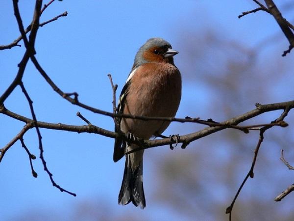 birds-on-tree- (15)