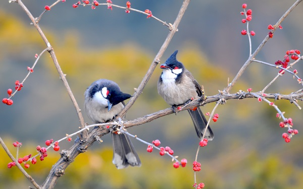 birds-on-tree- (17)